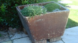 An abandoned pig trough in a local garden, now used for bedding plants